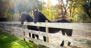 equine-therapy-programs
