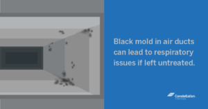 Black Mold in Air Ducts