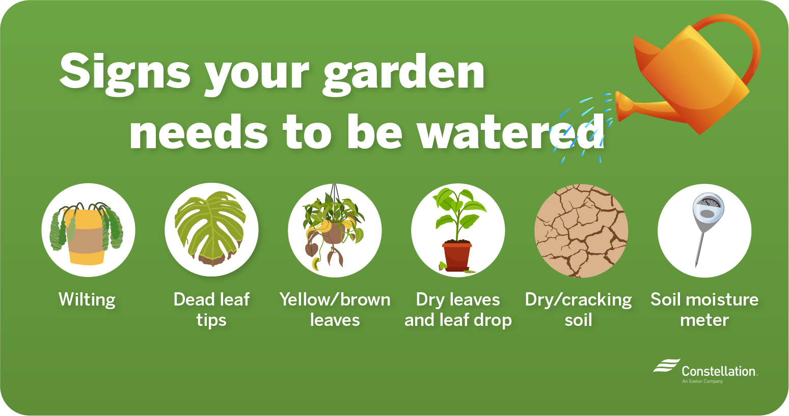 Signs your garden needs to be watered
